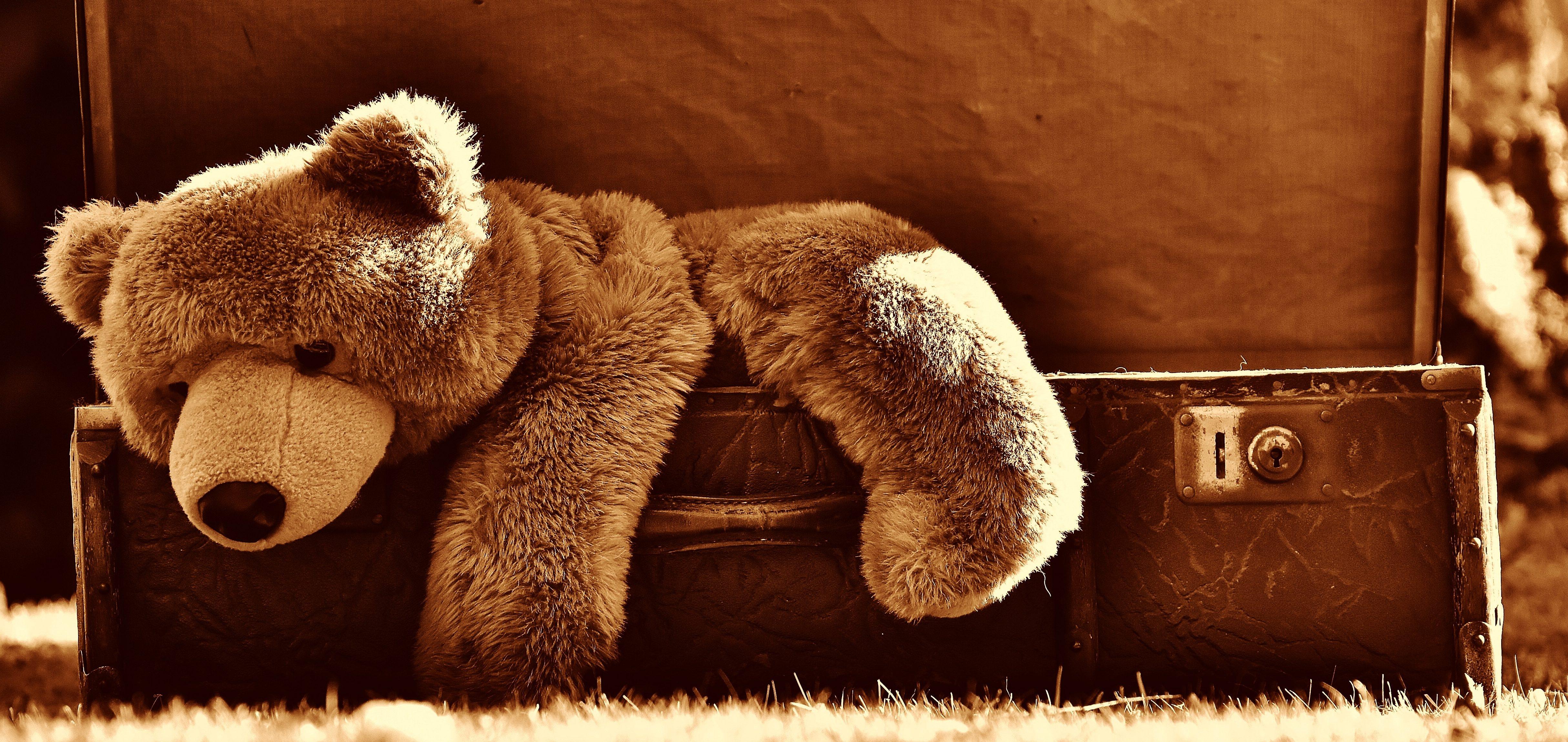 Ein Plüsch Teddybär klettert aus einem antiken Koffer in einer unserer Ferienwohnungen im Goms.